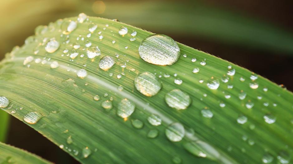 Você sabe qual é a diferença entre umidade relativa e umidade absoluta?